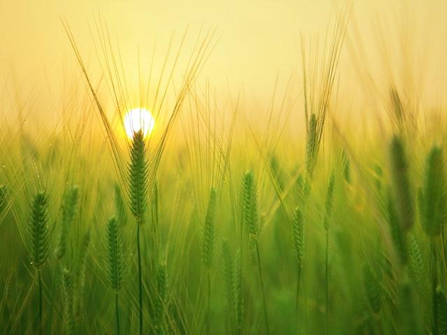 Le bio, un procédé durable